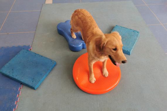giocomotricità cane fisioterapia