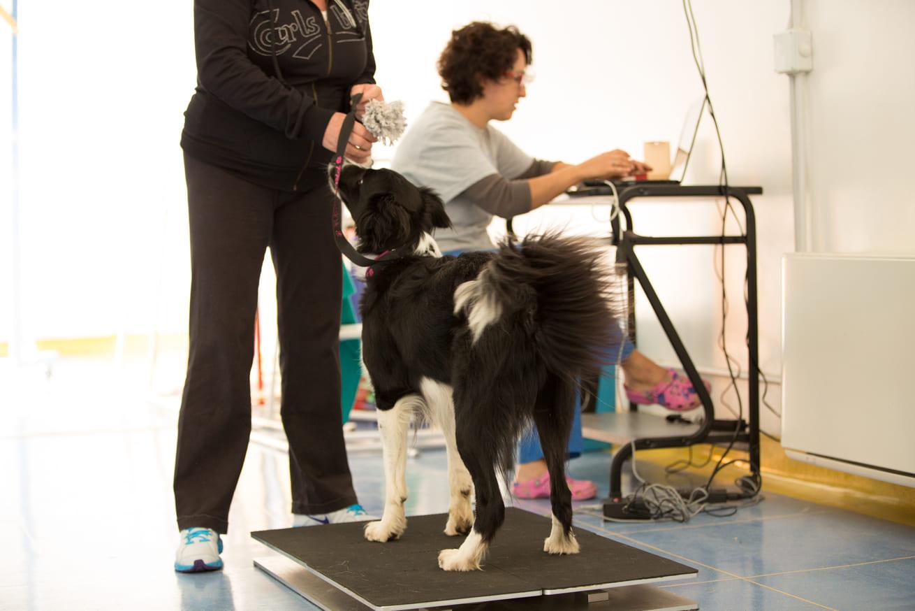animal wellness visita fisiatrica cani