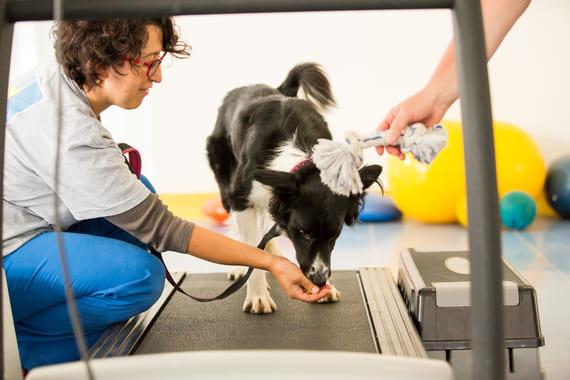 Land treadmill o Tapis Roulant animalwellness