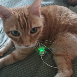 terapia artrosi cane e gatto