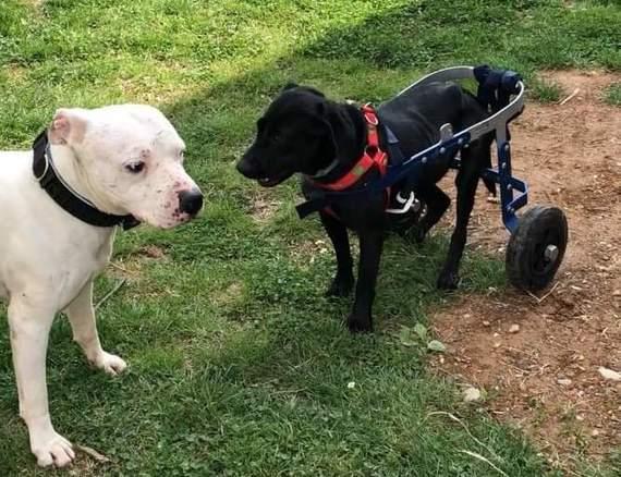 carrellini su misura per cani e gatti
