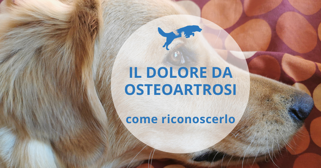 come riconoscere il dolore da osteoartrosi nel cane