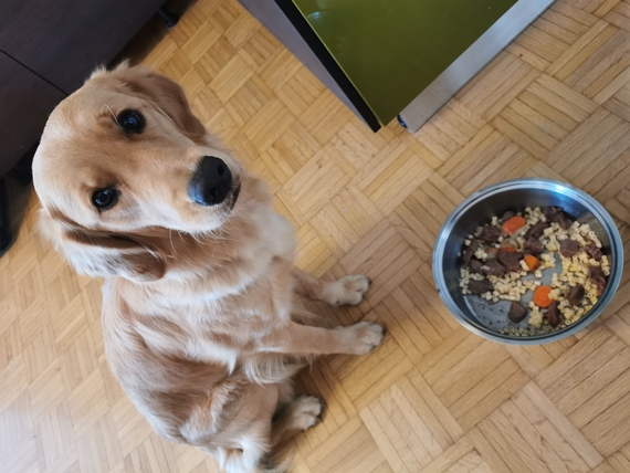 osteoartite cane dieta e nutrizione