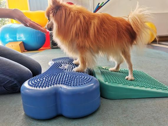 esercizi fisioterapia per cani