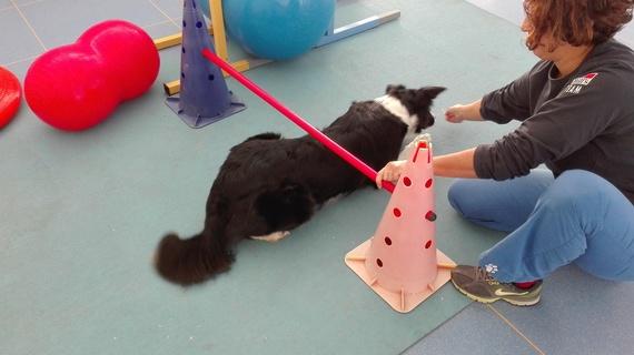 fisioterapia per cani esercizi