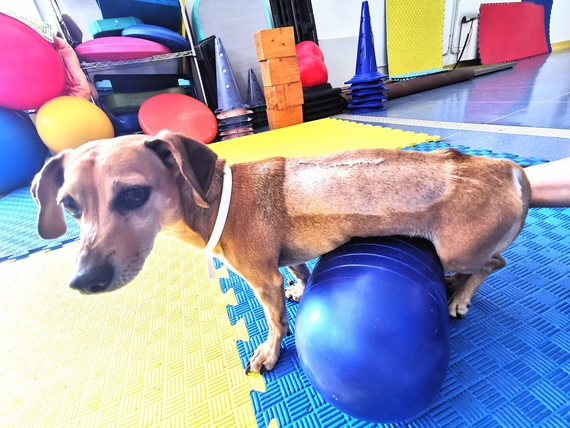 esercisi fisioterapia cane animal wellness