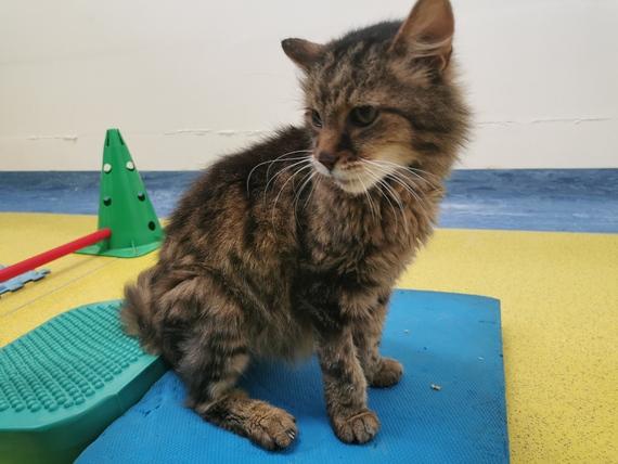 riabilitazione gatto animal wellness