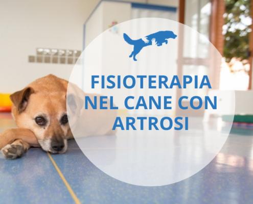 fisioterapia nel cane con artrosi
