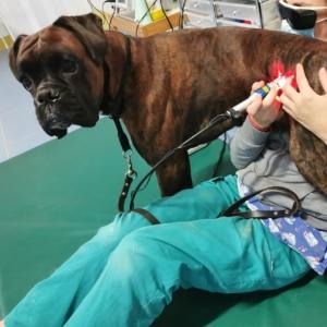 laserterapia artrosi cane