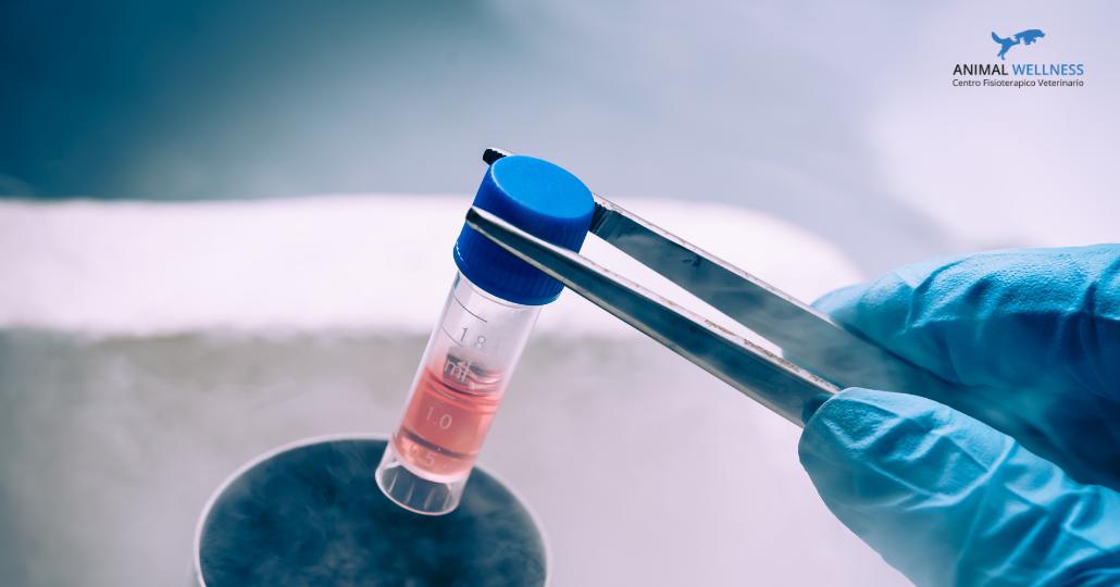 medicina rigenerativa artrosi cane