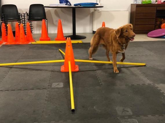 allenamento cane atleta animal wellness