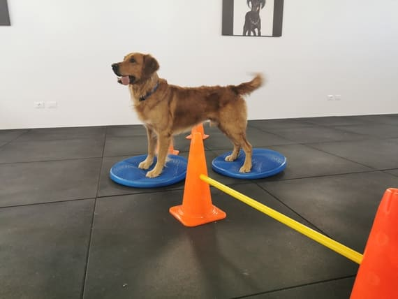 programmi allenamento cane atleta
