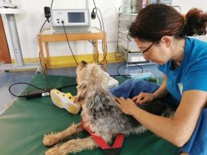 terapia manuale artrosi cane