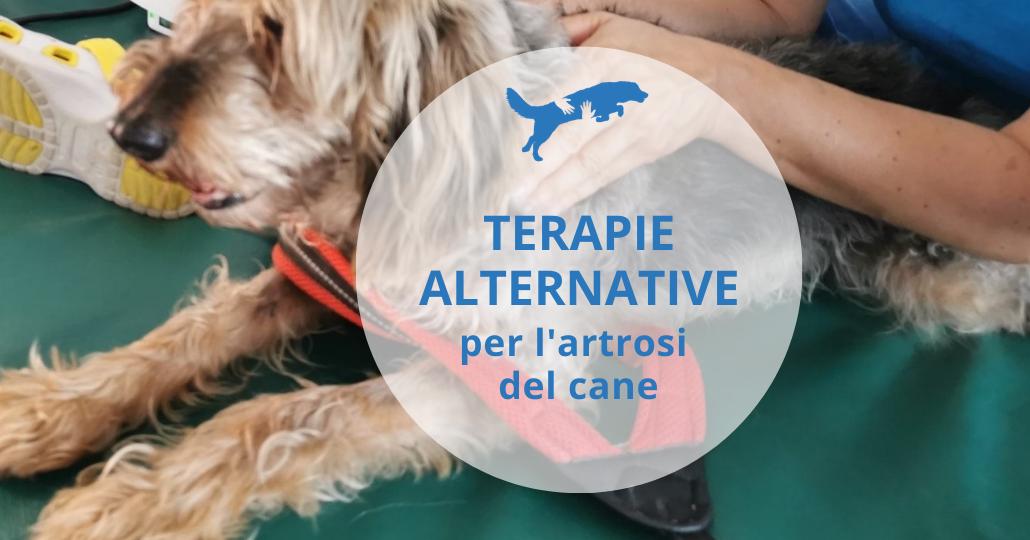 terapie alternative per artrosi cane