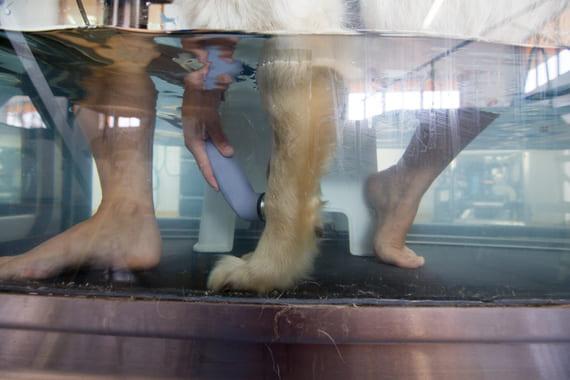 ultrasuoni terapia veterinaria fisioterapia animali