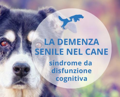 demenza senile nel cane sindrome da disfunzione cognitiva