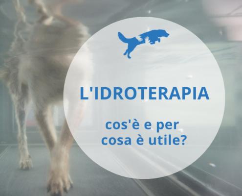idroterapia veterinaria cos'è e per cosa è utile