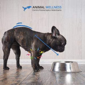 la ciotola ideale per cani con artrosi