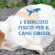 esercizio fisico cane obeso sovrappeso