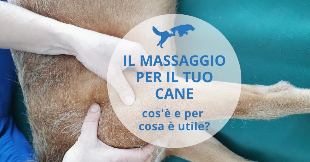 massaggio per il cane